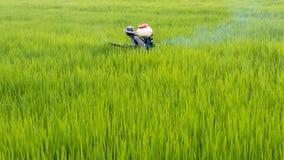 Fertilizzante di spruzzatura dell'agricoltore in risone Fotografie Stock Libere da Diritti
