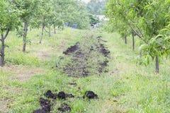 Fertilizzante organico del frutteto Fotografia Stock