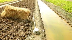 Fertilizzanti agricoli di verdure organici Immagini Stock