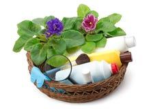 Fertilizzanti chimici di saintpaulia della viola africana, antiparassitari e Fotografia Stock