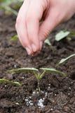 Fertilizzazione Immagini Stock Libere da Diritti
