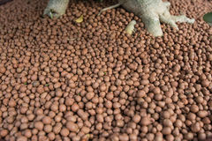fertilizzi Fotografia Stock Libera da Diritti