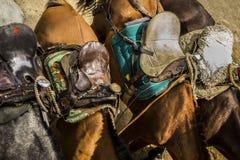 Ferus d'Equus - cheval domestique photos libres de droits