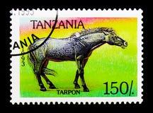 Ferus de ferus d'Equus de Tarpan, serie de chevaux, vers 1993 Images stock