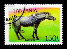Ferus di ferus di equus di Tarpan, serie dei cavalli, circa 1993 Immagini Stock