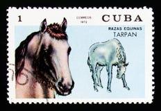 Ferusen för den Tarpan Equusferusen, häst föder upp serie, circa 1972 Arkivfoton