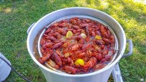 Fervura dos lagostins de Louisiana fotos de stock royalty free