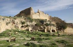 fes摩洛哥废墟 免版税图库摄影