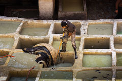 Fes, Μαρόκο - 28 Φεβρουαρίου 2017: Σκληρή δουλειά στους φλοιούς μέσα Στοκ φωτογραφία με δικαίωμα ελεύθερης χρήσης