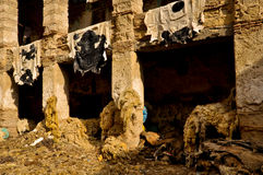 Fes Leather Tannery Royalty Free Stock Images