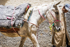 Fes, Marocco,man with horse in old Medina street Stock Image