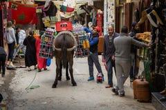 Fes Marocko - Februari 28, 2017: Åsnan är det mest gemensamma arbetet Fotografering för Bildbyråer