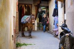 Fes Marocko - Februari 28, 2017: Åsnan är det mest gemensamma arbetet Arkivbild