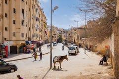 Fes Marocko - Februari 28, 2017: Åsnan är det mest gemensamma arbetet Arkivfoton
