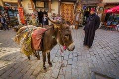 Fes Maroko, Luty, - 28, 2017: Osioł jest najwięcej pospolitego pracy Zdjęcie Stock