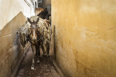 FES, MOROCCO, April 19: people walking on street of Fes, Morocco Stock Images