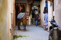 Fes, Morocco - February 28, 2017: Donkey is the most common work Stock Photography