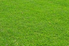 Fescue Grass Royalty Free Stock Photos