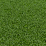 Fescue Grass field. 3D illustration Royalty Free Stock Photos
