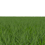 Fescue Grass field over white. 3D illustration Royalty Free Stock Photo