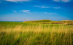 Fescue grass golf course. Long fescue grass at a golf course in Nova Scotia Stock Image