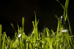 A Few Blades of Grass Stock Photo