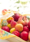 Fesh apricots and plums Stock Photography