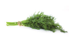 Fesh dill Stock Photography