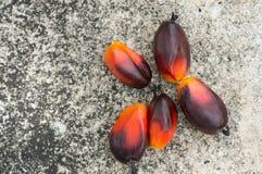 Fesh oleju palmowego ziarno Zdjęcia Royalty Free