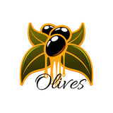 Fesh olives and olive oil vector icon. Olive oil dripping from fresh olives. Vector icon olive tree branch with green leaves and black ripe olive fruits Royalty Free Stock Images
