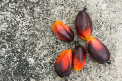 Fesh palm oil seed. On floor royalty free stock photos