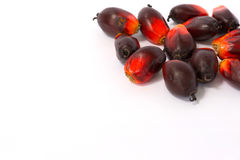 Fesh palm oil seed. On white background royalty free stock photo