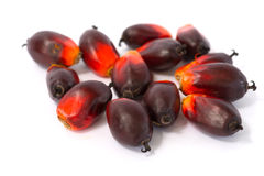 Fesh palm oil seed. On white background stock photo