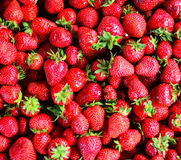Fesh strawberry background Royalty Free Stock Photos