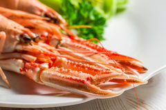 Feshly cooked scampi on a plate Royalty Free Stock Photo