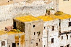 feslädermorocco yellow Royaltyfri Bild