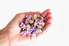 Festão artificial do pato violeta da flor na mão fêmea Imagem de Stock