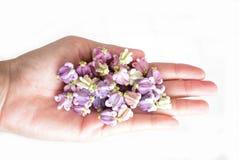 Festão artificial do pato violeta da flor na mão fêmea Foto de Stock Royalty Free