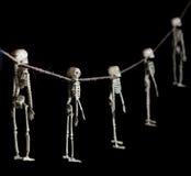 Festão de esqueleto Fotografia de Stock Royalty Free