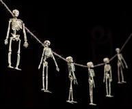 Festão de esqueleto Imagem de Stock Royalty Free