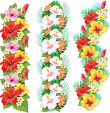 Festão de flores do hibiscus Foto de Stock Royalty Free