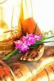 Festão de flores frescas (Phoung Malai: Tailândia feito à mão) Imagens de Stock Royalty Free