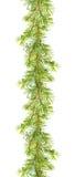Festão do Natal - ramos de árvore do cedro Tira do quadro da aquarela Imagem de Stock