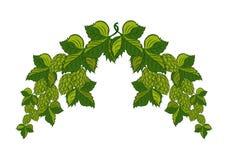Festão longa dos lúpulos com folhas e cones, Imagem de Stock Royalty Free