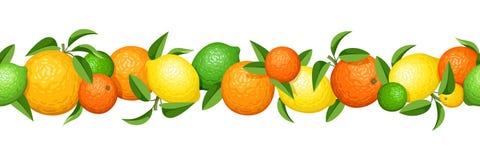 Festão sem emenda horizontal com citrinas Ilustração do vetor ilustração do vetor
