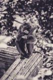 Fest von Blumen für diesen Makaken an der Spitze Krabi, Thailand Stockfotos