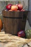 Festa Autumn Apples e zucche Immagini Stock