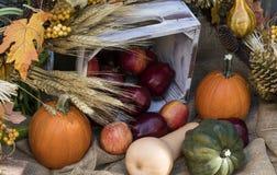 Festa Autumn Apples e zucche Immagine Stock Libera da Diritti