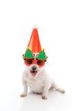 Festa de Natal feliz do cão imagem de stock royalty free