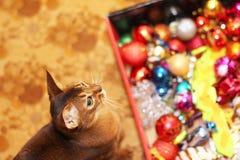 Festa del nuovo anno e del gatto Il gatto abissino sta preparando celebrare il Natale fotografie stock